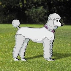 Pups On Parade - Poodle