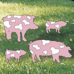 Painted Porkers